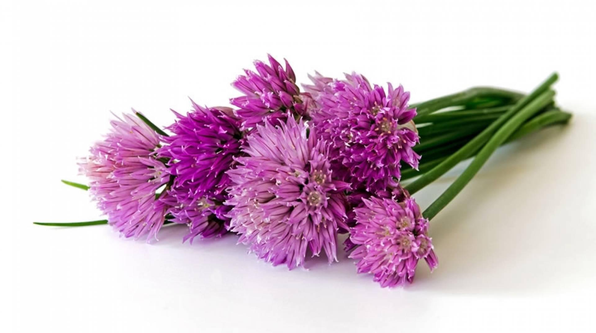 Edible Flowers In Food Preparation